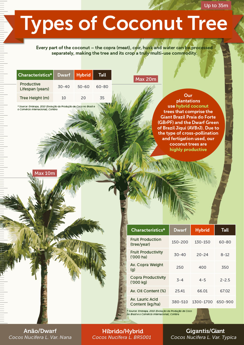 Coconut-Tree-Types