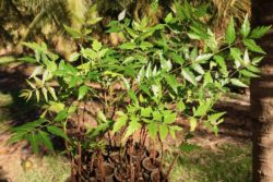A new year and new batch of saplings