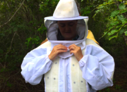 Proving Neem and Bees Live in Harmony