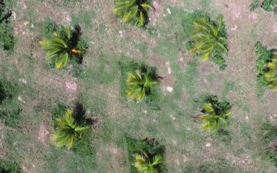 Plantation Development Video Update – February 2017